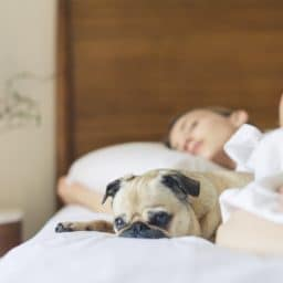 woman sleeping in bed with a dog